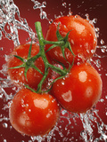 Four Tomatoes No2