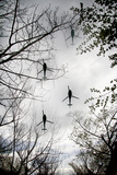 Helicopters and Tree