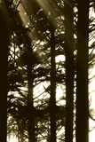 Sepia Shadows II