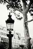 Parisian Lightposts BW II