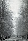 Frosty Landscape 6