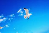 Sea Gulls  Miami Beach