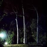 Cervo-Sotto-3-Pini