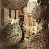 The Forgotten Flying Pig Invasion Papier Photo par Kinga Britschgi