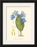 Periwinkle Blooms II