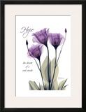 Purple Tulip  Hope