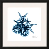 Starfish and Sand Dollar in Blue