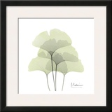 Ginkgo Quad in Green