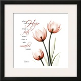 Swaying Tulips Pink  Hope