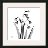 Snowdrop Black and White