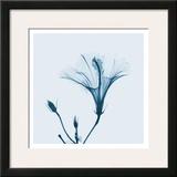 Hibiscus in Blue