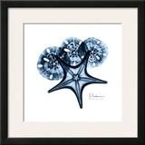 Starfish in Blue