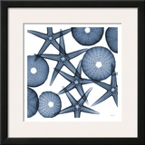 Collage of Starfish and Sea Urchins