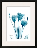 Three Gentian in Blue