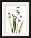 Blue Floral X-ray  Snowdrop
