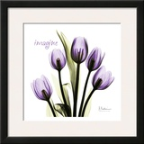 Tulip in Purple  Imagine