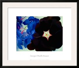 Black Hollyhock Blue Larkspur  1930