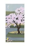 Cherry Tree  Spring  2013