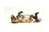 Rolling Horse (Przewalski)  2013