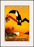 L'Amazone les Antilles