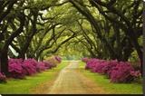 Chemin bordé d'arbres et d'azalées Tableau sur toile