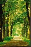 Chemin dans la forêt Tableau sur toile par Hein Van Den Heuvel