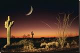 Arizona-Ocotillo And Saguaro Tableau sur toile