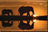 Jim Zuckerman African Silhouette Elephants Art Print Poster Tableau sur toile