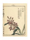 Chinese Ground Orchid  Bletilla Striata