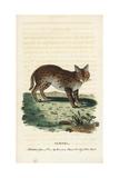 Serval Cat  Leptailurus Serval