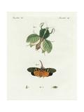 Leaf Mantis  Lantern Fly  and European Lantern Fly