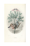 Cupid Hiding in a Myrtle Bush  Myrtus Communis