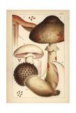 Bleeding Mushroom and Field Mushrooms
