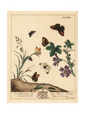 Meadow Brown Butterfly  Wood Lady and Grizzled Skipper