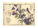 Purple Magnolia  Magnolia Liliiflora  and Greater Chickweed