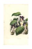 Sweet Violet Flower Fairy  Viola Odorata