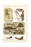 Fossils of Skeletons of Extinct Dinosaurs and Mammals