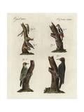 Woodpeckers  Treecreeper and Nuthatch