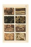 Marble Varieties