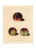 Peach Varieties  Prunus Persica