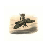 Elf Riding a Death'S-Head Hawkmoth in the Evening