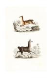 Vicuna and Llama