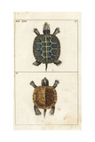 Painted Turtle and Yellow-Bellied Slider