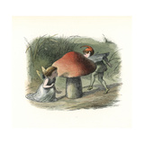 Fairy Hiding from an Elf Behind a Toadstool