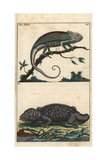 Mediterranean Chameleon and Tokay Gecko