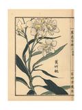 Kyouchikutou or Oleander Flower  Nerium Oleander Var Indicum