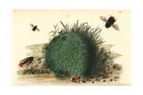 Red-Tailed Bumblebee  Bombus Lapidarius