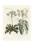 Venus Flytrap and Trembling Plant