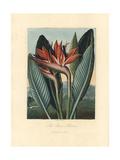 The Queen Flower  Strelizia Reginae