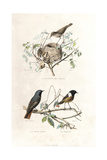 Garden Warbler  Redstart and European Stonechat
